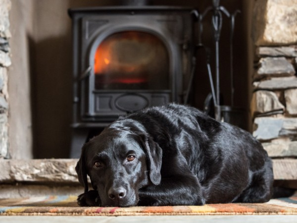 dog laying in front of fireplace